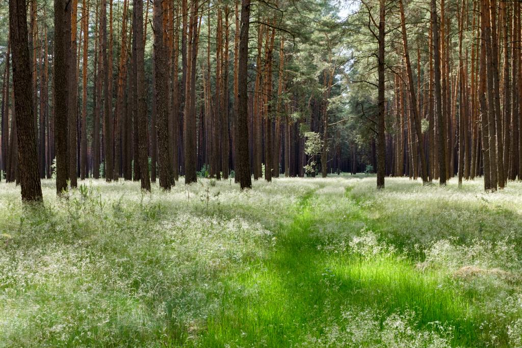 Einfach Wald